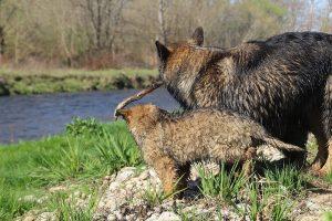 comme-chiens-et-loups 209