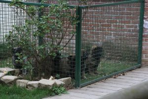 comme-chiens-et-loups 634
