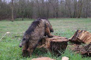 comme-chiens-et-loups 682