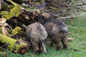 comme-chiens-et-loups 702