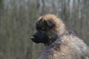 comme-chiens-et-loups 744