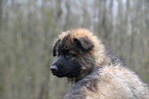 comme-chiens-et-loups 745
