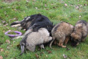 comme-chiens-et-loups 813