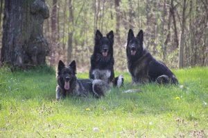 comme chiens et loups 046