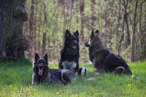 comme chiens et loups 047
