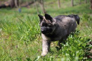 comme-chiens-et-loups 049