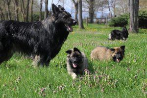comme chiens et loups 059