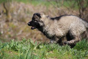 comme-chiens-et-loups 059