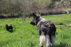 comme chiens et loups 065