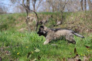 comme-chiens-et-loups 071