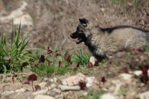 comme-chiens-et-loups 076