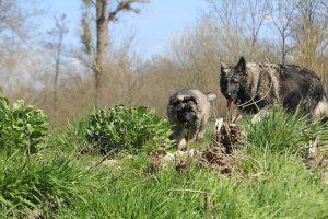 comme-chiens-et-loups 159