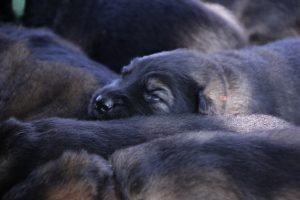 comme-chiens-et-loups 016