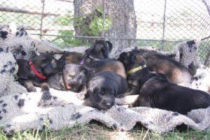 comme-chiens-et-loups 065