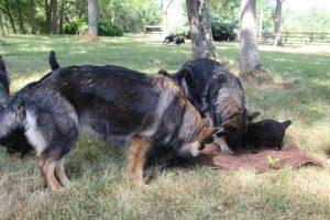 comme-chiens-et-loups 021