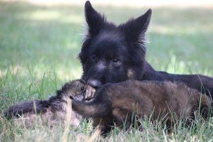 comme-chiens-et-loups 051