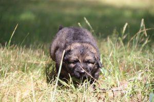 comme-chiens-et-loups 057