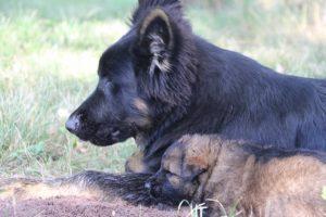 comme-chiens-et-loups 069