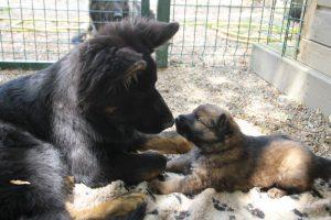 comme-chiens-et-loups 075
