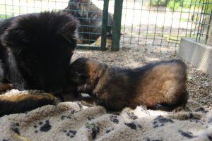 comme-chiens-et-loups 077