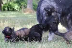 comme-chiens-et-loups 087