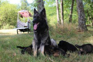 comme-chiens-et-loups 097