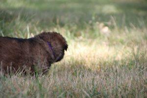 comme-chiens-et-loups 116