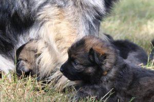 comme-chiens-et-loups 122
