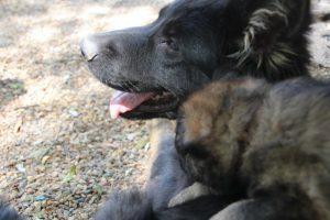 comme-chiens-et-loups 163