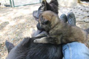 comme-chiens-et-loups 165