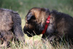 comme-chiens-et-loups 181