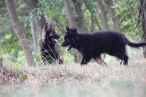 comme chiens et loups0020