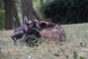 comme chiens et loups0022