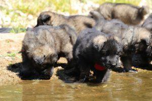 comme-chiens-et-loups0022