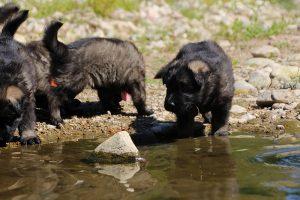 comme-chiens-et-loups0023