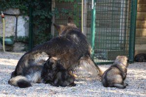 comme-chiens-et-loups0029