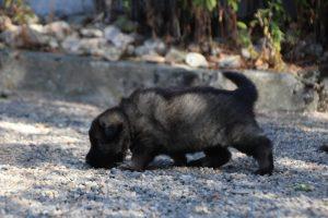 comme-chiens-et-loups0034
