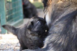 comme-chiens-et-loups0039