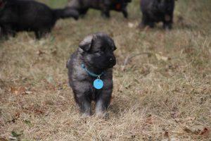 comme chiens et loups0041