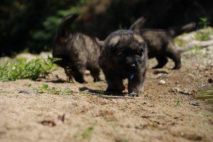 comme-chiens-et-loups0045