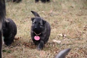 comme chiens et loups0048