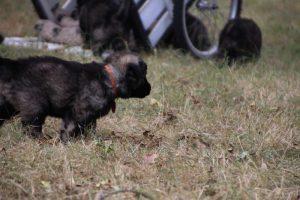 comme chiens et loups0051