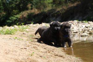 comme-chiens-et-loups0052