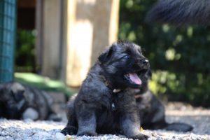 comme-chiens-et-loups0054