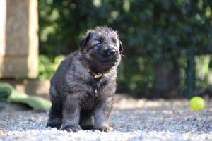 comme-chiens-et-loups0063