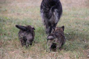 comme chiens et loups0077
