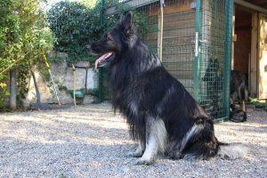 comme-chiens-et-loups0077