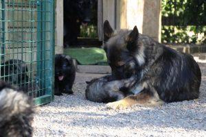 comme-chiens-et-loups0079