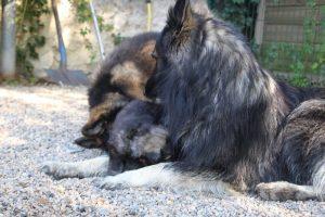 comme-chiens-et-loups0088