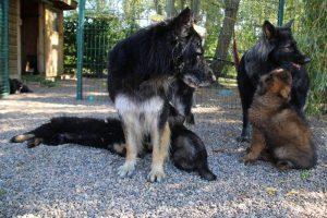 comme-chiens-et-loups0097